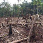 Save the Rainforest – Again!